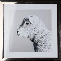 Bilde Fåret Shawny - 50x50 cm