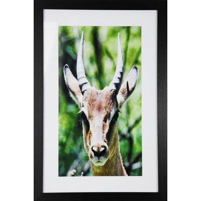 Maleri med ramme (Antilope) - 40x60 cm