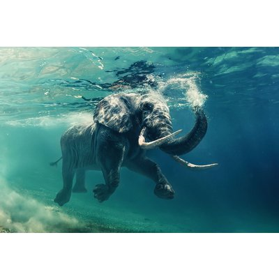 Glassbilde Elephant - 120x80 cm